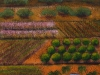 'Mallee Farm'